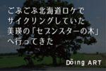 美瑛の「セブンスターの木」に行ってきた