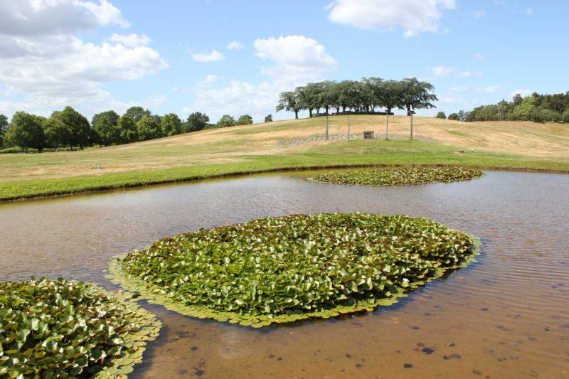 スウェーデンのスコーグスシュルコゴーデンの池と蓮の花