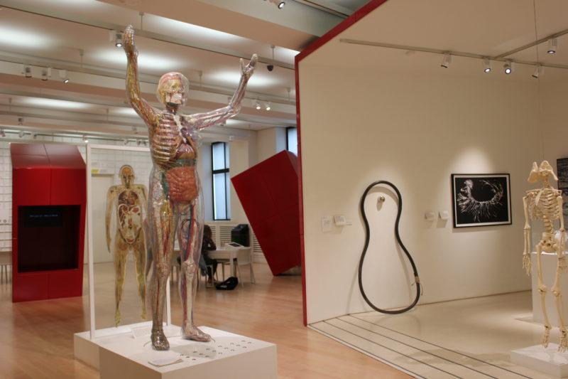 ウエルカムコレクションの透明人体模型