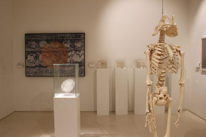 ウエルカムコレクションの謎の骸骨