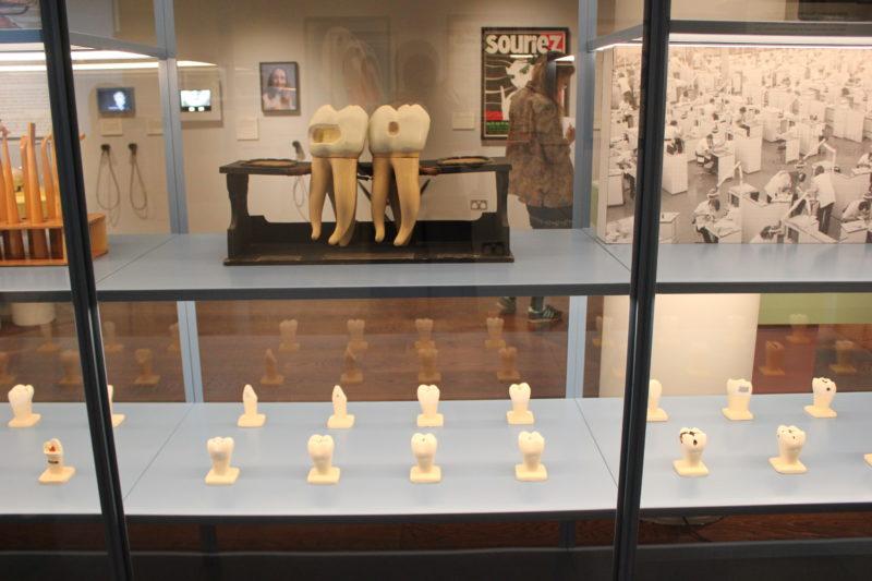 ウエルカムコレクションの歯の模型