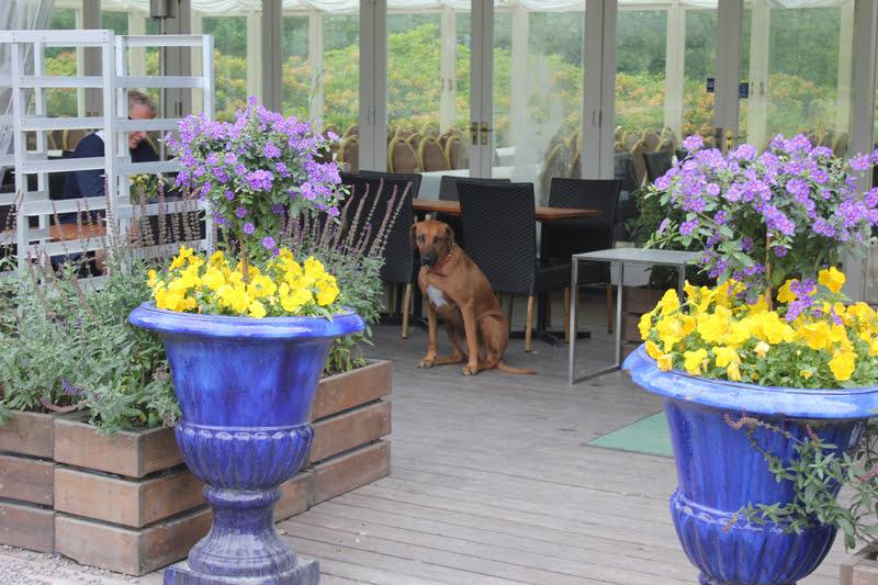 スウェーデンローゼンダールガーデンのカフェと犬
