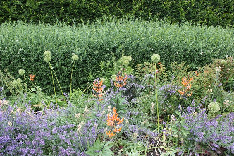 スウェーデンローゼンダールガーデンの植物