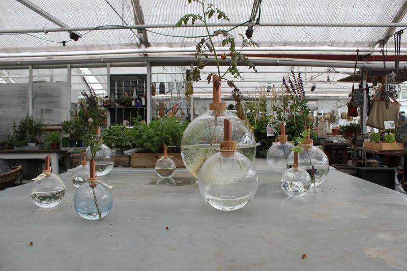 スウェーデンローゼンダールガーデンの温室にある植物販売